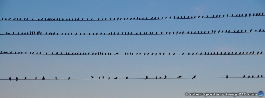 Birds on Wires - Facebook Cover Photos