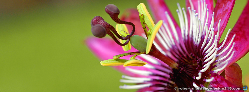 Free Facebook Cover Photos - Interesting Flower, photo by Robert Giordano