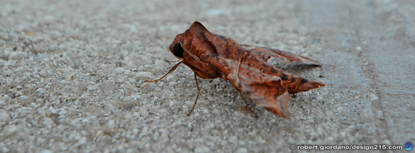 Free Facebook Cover Photos - Camouflage Insect, photo by Robert Giordano