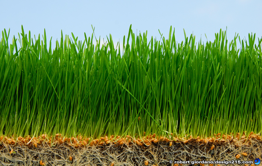 Food Photography - Wheatgrass, photo by Robert Giordano